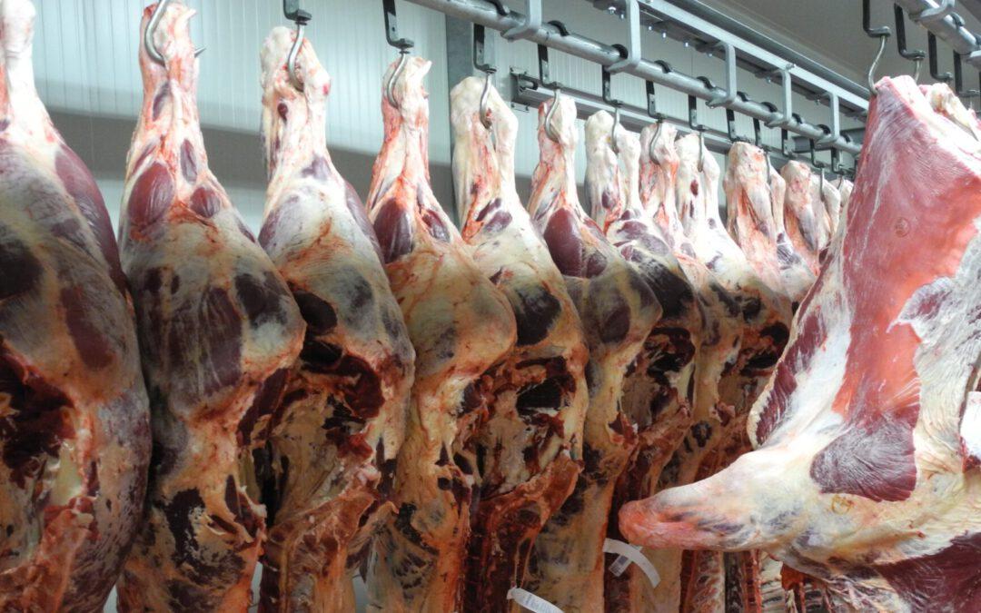 Více hovězího améně vepřového masa: německé jatečnictví za prvních pět měsíců 2019